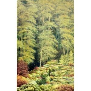 картина маслом, Лес, пейзаж