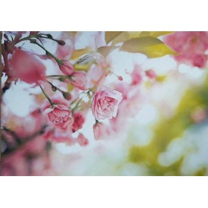 Нежные розы