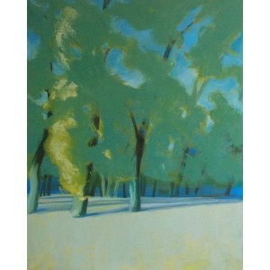 Black poplars