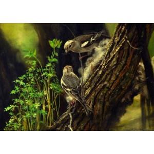 Пташки. Весенние хлопоты