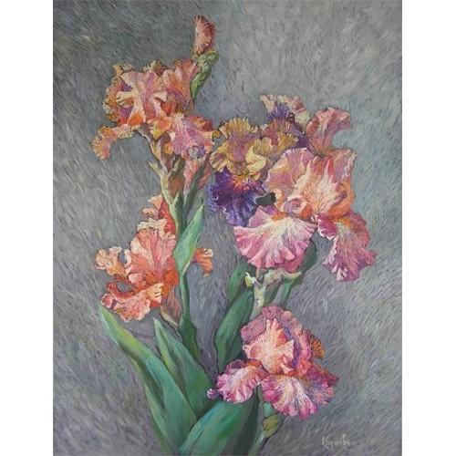 Розовые ирисы
