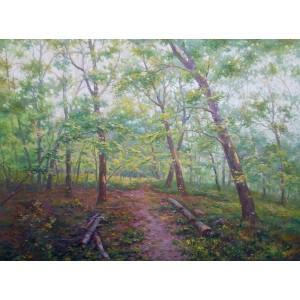 В прохолоді лісу