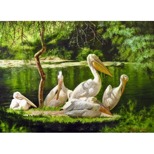 Семья пеликанов