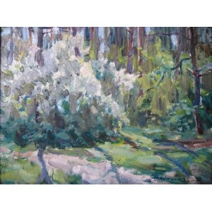 Черемуха в лісі зацвіла