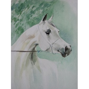 Голова арабской лошади
