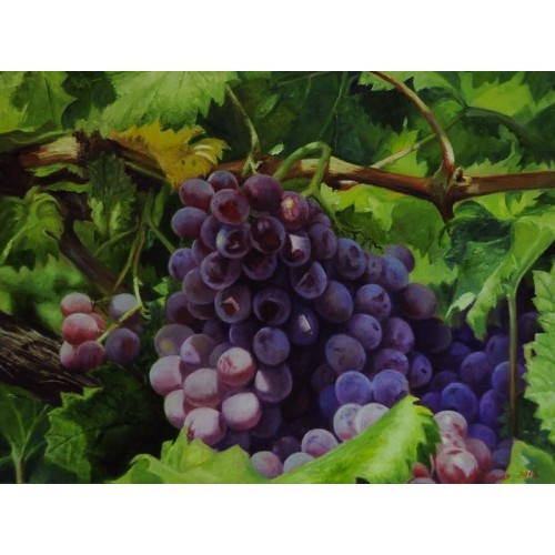 Виноград. Богатый урожай
