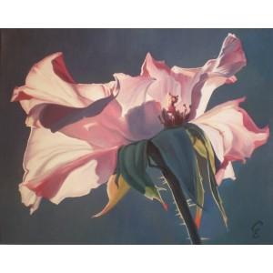 Крупный цветок шиповника