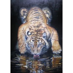 Тигр на водопое
